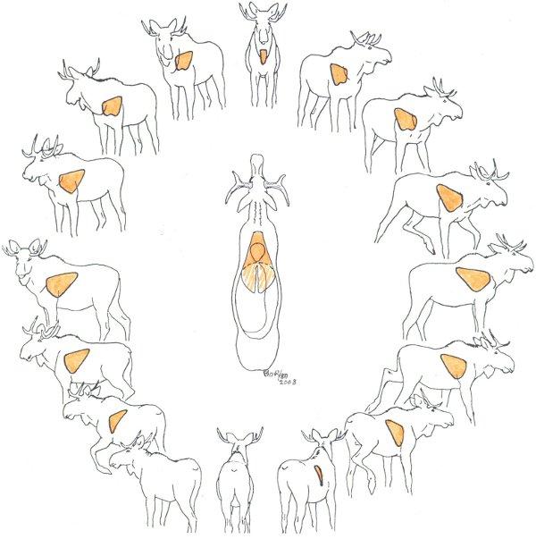 Caribou Anatomy
