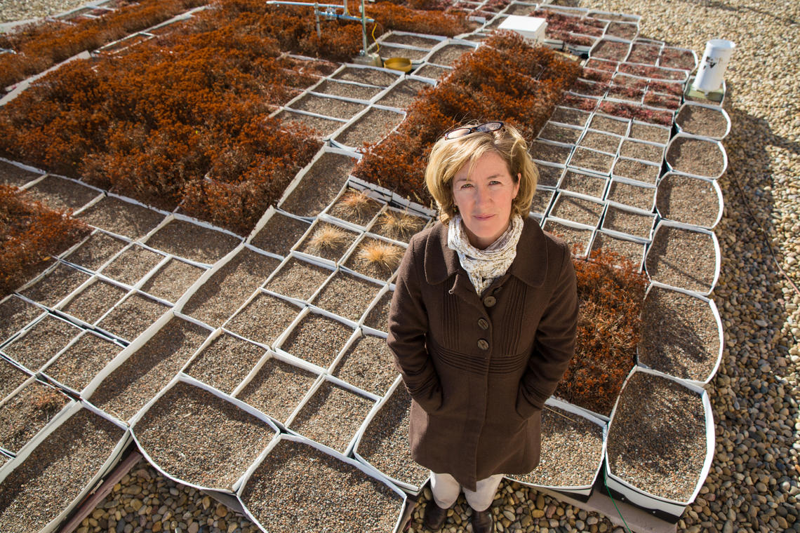 Karen Ross, a master's student in the Department of Geography, researches green roof technology in cold climates.