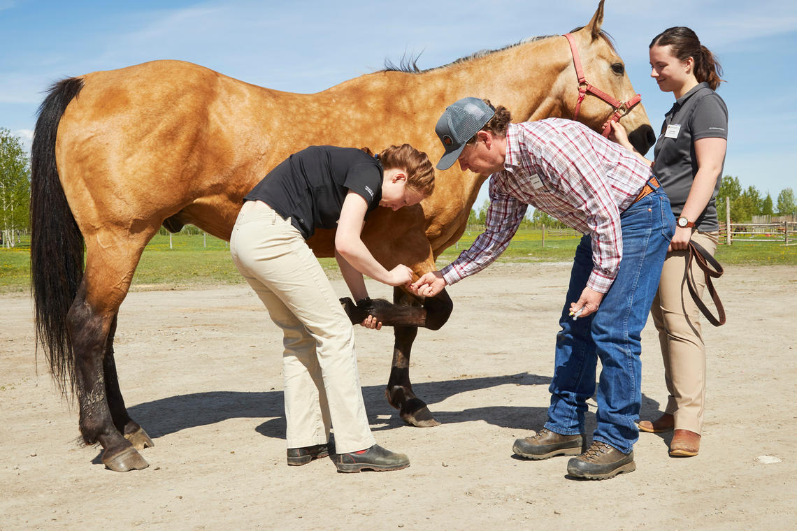 Mike Scott helps Veterinary Medicine student Brenna Sakatch and Erica Ward.