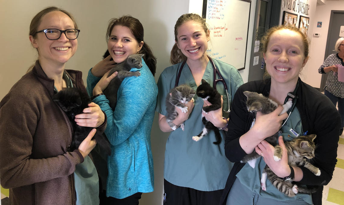 Vet Med students with kittens