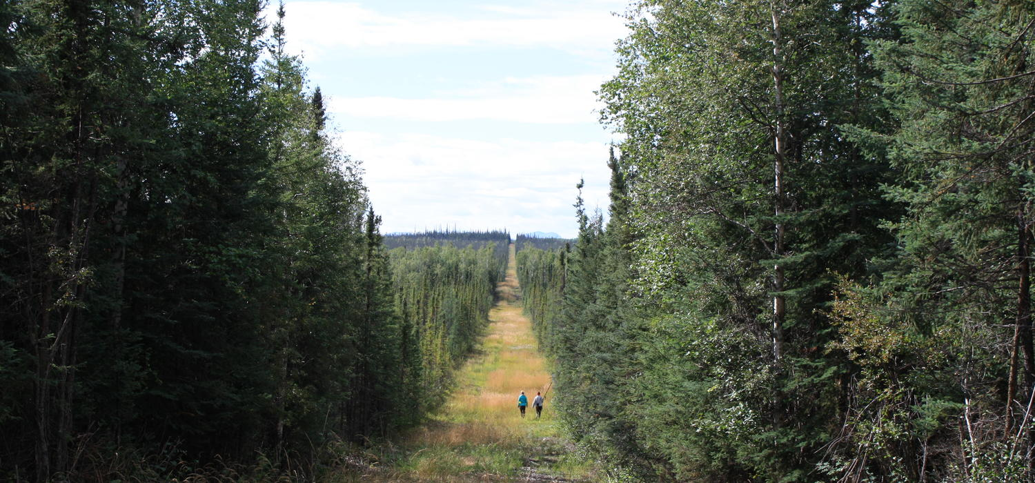 Seismic lines in Alberta's boreal forest boost methane ...