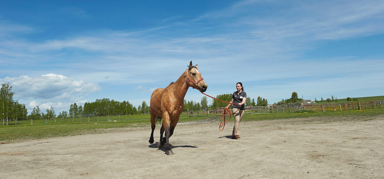 A student works with a horse during an equine rotation in 2019.