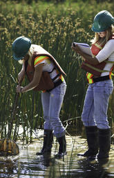 Suncor employees monitor wetlands.